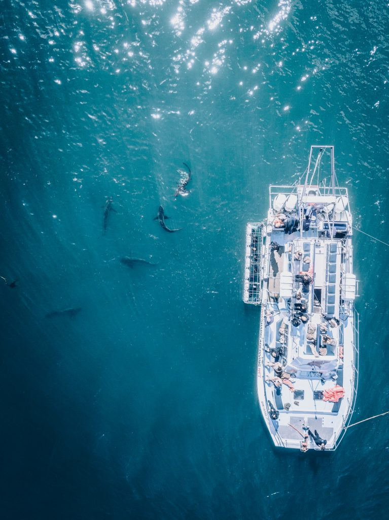 Experience shark cage diving in Kleinbaai, South Africa